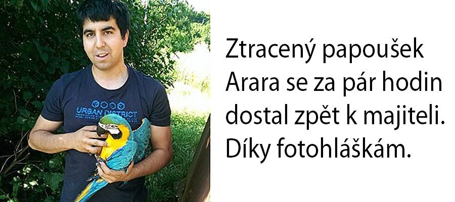 Papoušek Arara